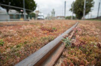 Décalaminage des rails, novembre 2020